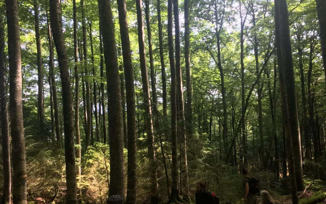 La réserve naturelle régionale du Pibeste-Aoulhet
