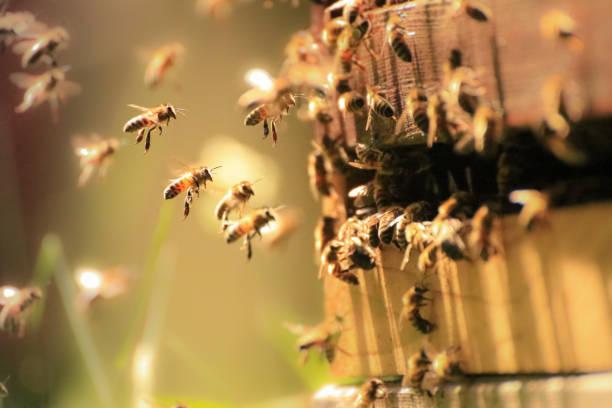 La démocratie des abeilles